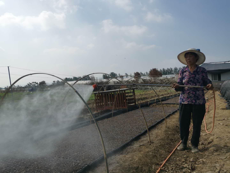 中国纪录|湖北阳新玉麟果蔬合作社:抢育小菜秧 生产自救忙